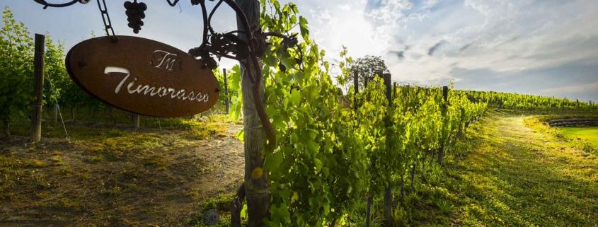 Camminare le vigne - Golosaria 2019